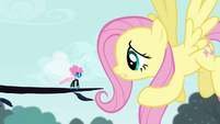 """Fluttershy """"one tiny acorn is a threat"""" S4E16"""