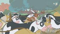 S01E04 Winona na grzbiecie krowy