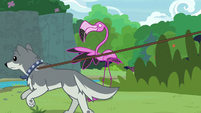 Sandra running past Scout the flamingo S9E18