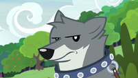 Sandra the wolf looking annoyed S9E18