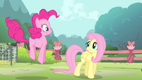 Fluttershy walking and Pinkie hopping S4E14