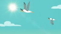 Seagulls flying through the sky EGSB