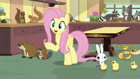 "Fluttershy ""I already have the perfect solution"" S7E5"