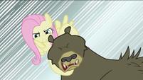 Fluttershy about to break bear's neck S2E03