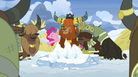 Pinkie Pie -a yak tradition, right-- S7E11