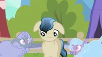 Depressed Crystal Pony next to sheep S3E2