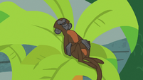 Monkey sleeping in a palm tree S9E23