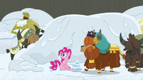 Yak hiding his face in shame S7E11