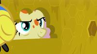 Fluttershy peering inside the beehive S7E20