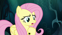 """Fluttershy """"you can come back with me"""" S6E11"""