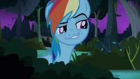 Rainbow Dash hiding S4E04