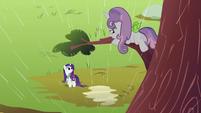 Sweetie Belle on the tree branch S2E05
