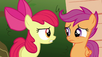 Apple Bloom chastising Scootaloo S6E19