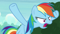 """Rainbow Dash """"done with each other!"""" S8E17"""