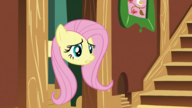 S03E10 Fluttershy zagląda do pokoju