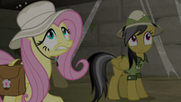 Fluttershy and Daring in shaking corridor S9E21