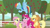 """Rainbow Dash """"I'm kind of an expert"""" S6E18"""
