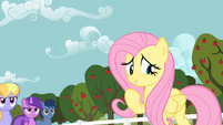 Fluttershy doesn't mind S02E15