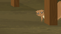 Squirrel sad and hungry S5E23