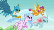 S08E01 Ocelka, Gallus, Silverstream i Smolder latają