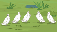 Group of doves listening to Fluttershy S9E26