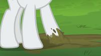 Rarity rubbing her hoof in the dirt S6E3