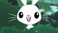 Bunny Fluttershy looking hopeful S9E18