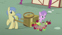 Diamond topples Goldengrape's apple cart S5E18