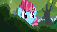 Chiffon Swirl looking past some bushes S7E13