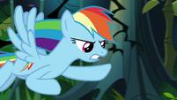 Rainbow Dash flying through jungle S9E21