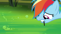 Rainbow dips cattail in the swamp water S8E17