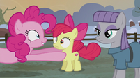 Pinkie places Apple Bloom next to Maud S5E20