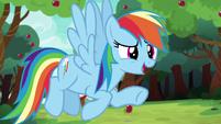 """Rainbow Dash """"nopony beats Ponyville!"""" S6E18"""
