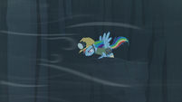 Rainbow looks down from the ledge S5E8