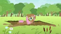 Fluttershy in mud S2E22