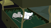 Mice going to sleep in small box S7E5