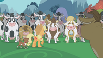 Cows spooked by the thought of snakes S1E04