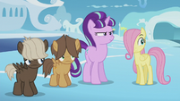 Foals still confused by Twilight's behavior S5E25
