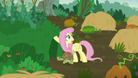 """Fluttershy """"this fight is really affecting the animals"""" S5E23"""