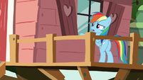 Rainbow Dash confused outside the window S8E20
