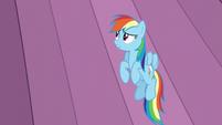 Rainbow looks at the curtains S6E2