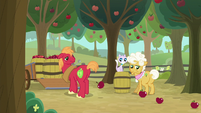 Goldie's cat swats apple off the barrel S9E10