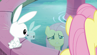 Fluttershy and Angel looking at their reflections S9E18