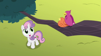 Sweetie Belle listens to chirping birds S8E6