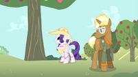 Rarity looks at apple tree S4E13