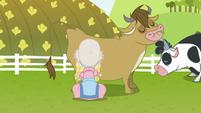 Granny Smith milking a cow S7E19