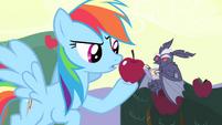 Rainbow Dash offering apple to vampire bat S4E07
