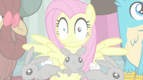 Fluttershy shocked by another camera flash MLPS3