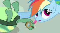 Rainbow Dash getting affection S3E11