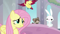 Fluttershy's animals wandering away S8E1